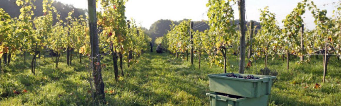 slider-van-druif-tot-wijn-interview-Leon-Masselink-blogDhz1BSxo5rq8W